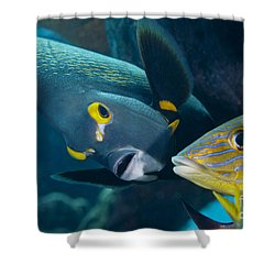A French Angelfish Swims Up Close Shower Curtain by Terry Moore