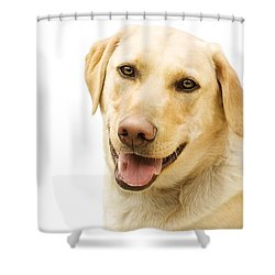 A Golden Labrador Shower Curtain by Chris Knorr