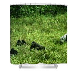 A Gorilla Family Wander In The Mbeli Shower Curtain
