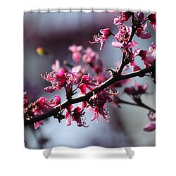 A Hint Of Spring  Shower Curtain by Amy Gallagher