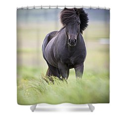 A Horse With Its Mane Blowing In The Shower Curtain by David DuChemin