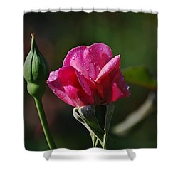 A Knockout Rose Shower Curtain by Skip Willits