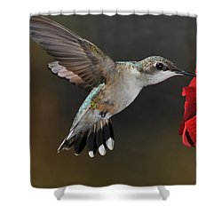 A Lady At Lunch Shower Curtain