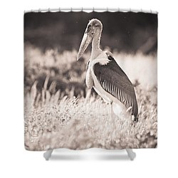 A Large Bird Stands In The Grass Shower Curtain by David DuChemin