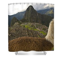 A Llama And Reconstructed Stone Shower Curtain by Michael Melford