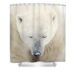 A Polar Bear Ursus Maritimus Resting Shower Curtain by Richard Wear