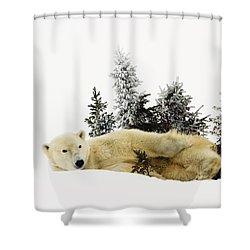 A Polar Bear Ursus Maritimus Shower Curtain by Richard Wear