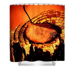 Shower Curtain featuring the photograph A Pose For Fall by Jessica Shelton
