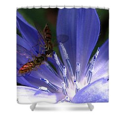 Shower Curtain featuring the photograph A Quiet Moment On The Chicory by J McCombie