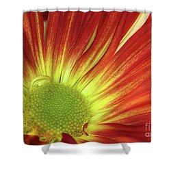 A Red Daisy Shower Curtain by Sabrina L Ryan