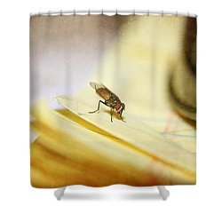 Shower Curtain featuring the photograph A Red Eyes Fly On The Yellow Paper by Ester  Rogers