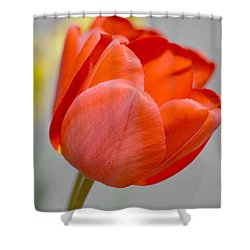 A Red Spring Tulip Flower Shower Curtain
