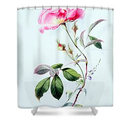 A Rose Shower Curtain by James Holland