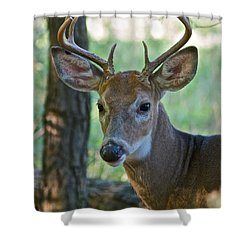 A Seven Point Profile 9752 Shower Curtain by Michael Peychich