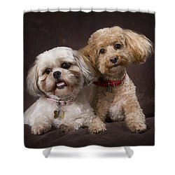 A Shihtzu And A Poodle On A Brown Shower Curtain by Corey Hochachka