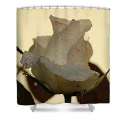 A Single White Rose Shower Curtain