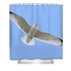 A Soaring Dove Shower Curtain by Don Hammond
