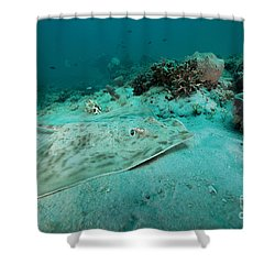 A Southern Stingray On The Sandy Bottom Shower Curtain by Michael Wood