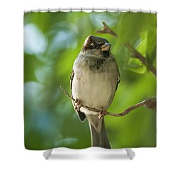 A Sparrow Perched On A Small Branch Shower Curtain by Ben Welsh
