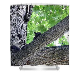 A Subtle Squirrel Shower Curtain
