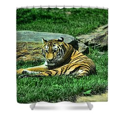 A Tiger's Gaze Shower Curtain by Paul Ward