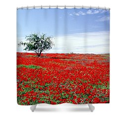 A Tree In A Red Sea Shower Curtain by Dubi Roman
