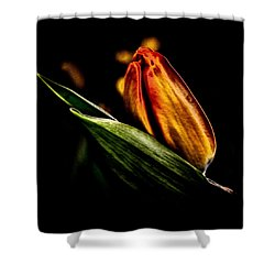 A Tulip With Sheen Shower Curtain by David Patterson