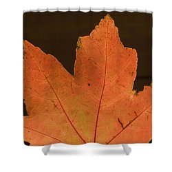 A Vibrant Colored Leaf Shower Curtain by Joel Sartore