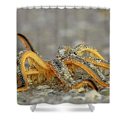 A Walk On The Beach Shower Curtain by Sean Allen