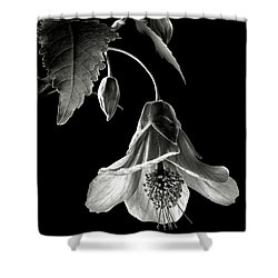 Abutilon In Black And White Shower Curtain