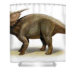 Achelousaurus Horneri, A Prehistoric Shower Curtain by Sergey Krasovskiy