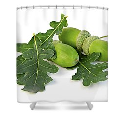 Acorns With Oak Leaves Shower Curtain by Elena Elisseeva