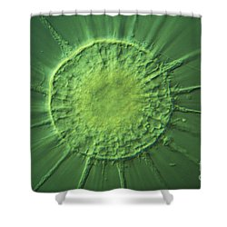 Actinophyrs Lm Shower Curtain by MI Walker