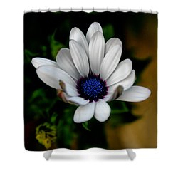 Shower Curtain featuring the photograph African Daisy by Lynne Jenkins