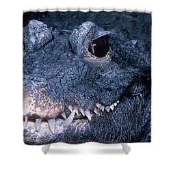 African Dwarf Crocodile Shower Curtain by Dante Fenolio