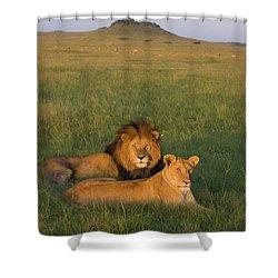 African Lion Panthera Leo Male Shower Curtain by Suzi Eszterhas