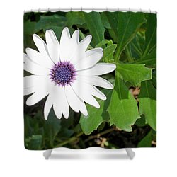 African Moon Flower Shower Curtain by Lisa Phillips