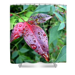 After The Rain Shower Curtain by Carolyn Marshall