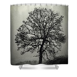 Age Old Tree Shower Curtain by Steve McKinzie