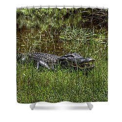 Aggressive Alligator Shower Curtain by Sean Allen