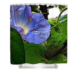Shower Curtain featuring the digital art Aging Morning Glory by Debbie Portwood