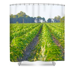Agriculture- Corn 1 Shower Curtain