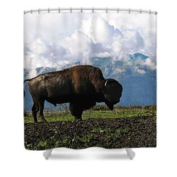 Shower Curtain featuring the photograph Alaskan Buffalo by Katie Wing Vigil