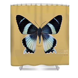 Alcides Agathyus Butterfly Shower Curtain