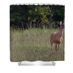 Alert Doe And Fawn Shower Curtain