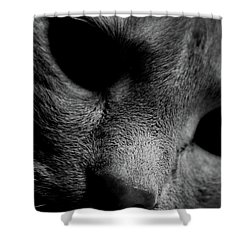 Alfie Two Shower Curtain by Jerry Cordeiro