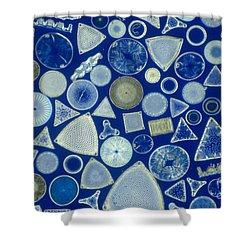 Algae, Fossil Diatoms, Lm Shower Curtain by M. I. Walker