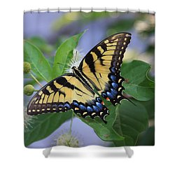 Alight Shower Curtain