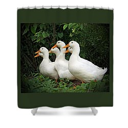 All My Ducks In A Row Shower Curtain