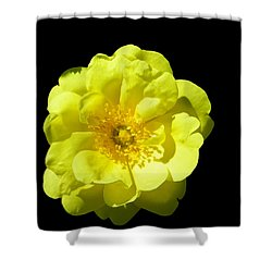 All Yellow Shower Curtain
